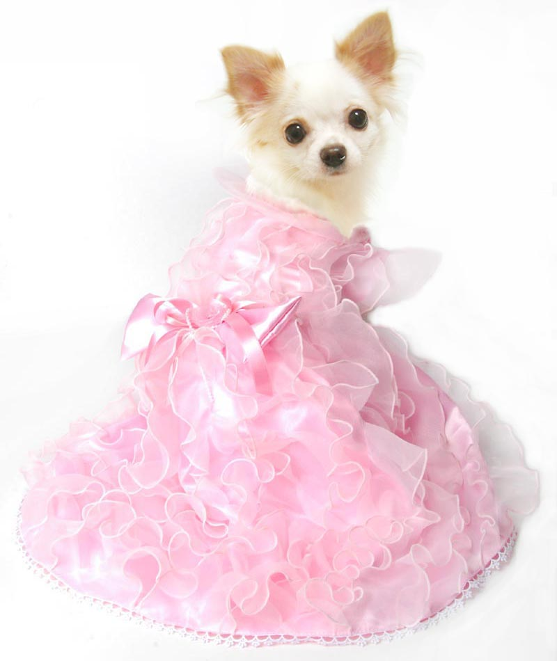 【楽天市場】猫用 服 コスプレ 猫 犬 仮装 洋服 おも …